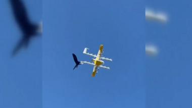 Drone de livrări, atacate de corbi