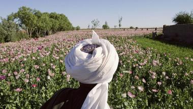 afgan camp de maci opiu afganistan