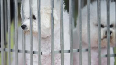 15 câini originari din România riscă să fie eutanasiați în Suedia