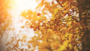 copac cu frunze uscate oranj