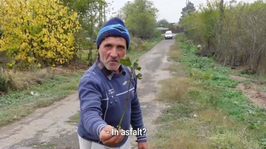 un barbat de la tara arata un puiet de pom care a crescut in asfalt