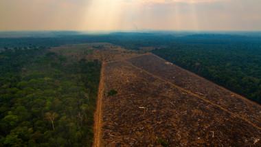 pădure defrișată în Brazilia
