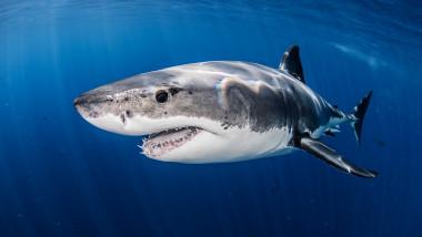 marele rechin alb