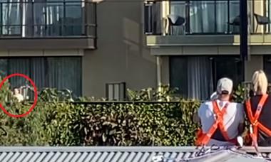 simona la balcon