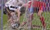 FOTBAL:ASTRA GIURGIU-FC BOTOSANI, LIGA 1 CASA PARIURILOR (18.03.2021)