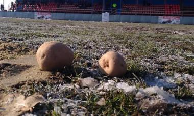 cartofi gazon balotesti