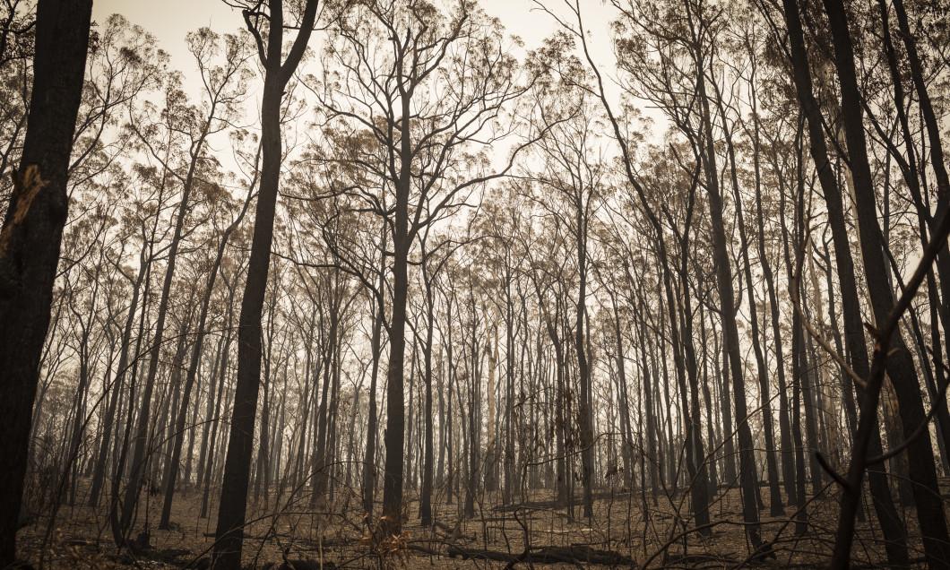 Smoke Covers East Gippsland Following Devastating Bushfires