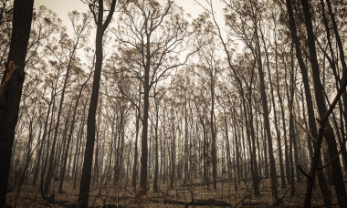 Smoke Covers East Gippsland Following Devastating Bushfires