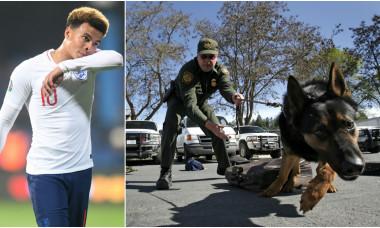 Jucătorii își cumpără câini de pază după ce Dele Alli a fost jefuit și bătut în propria casă