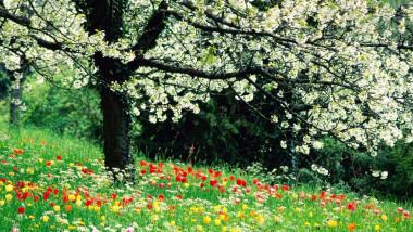 primavara flori soare - meteo-1.ro