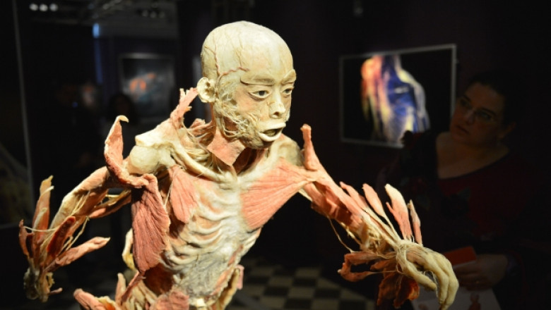 human bodz