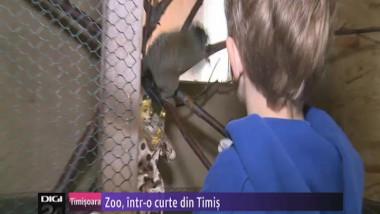 n0730 zoo in curte