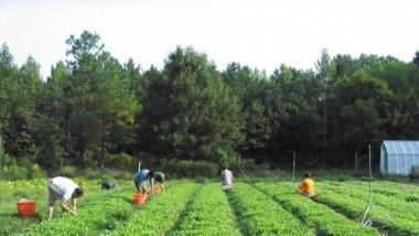 651x322 romania-lider-regional-pe-sectorul-agricultura-ecologica-1683