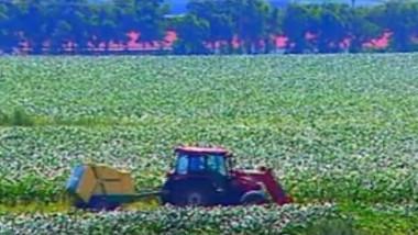 vaslui agricultura