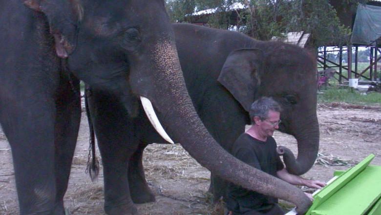 peter elefant canta pian