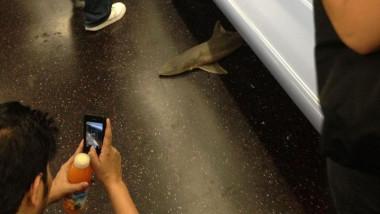 rechin metrou new york Isvett Verde
