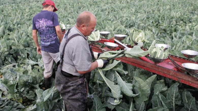 farmers.gif-378044