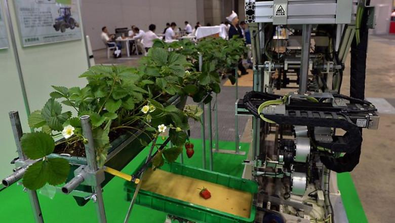 255817-strawberry-robot