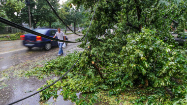 copac cazut - 5365719-Mediafax Foto-Ovidiu Iordachi