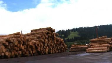 lemn bistrita-1