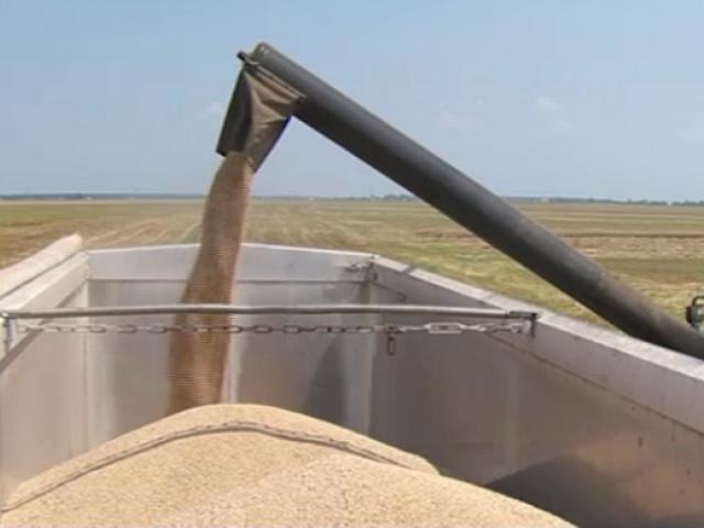 Guvernul pregătește suspendarea exporturilor și rechiziția de cereale