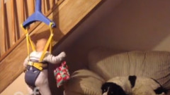 mission-impossible-baby-steals-from-dog