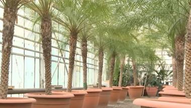 palmieri prima