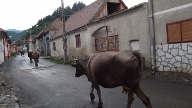 vaci spre casa - lp