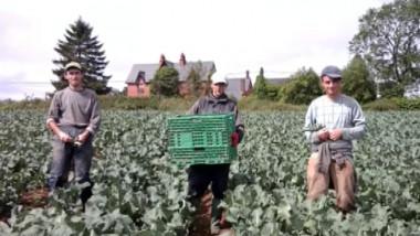 muncitori romani agricultura