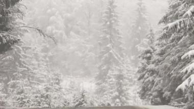 iarna - captura