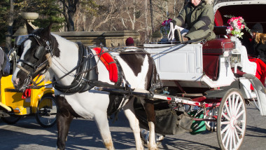 horse carriage 2