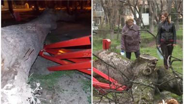 copac cazut prima