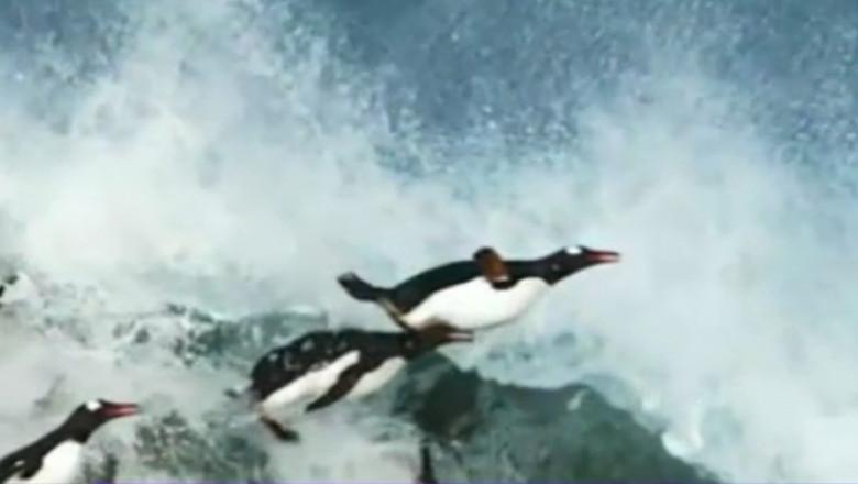 pinguini in zbor