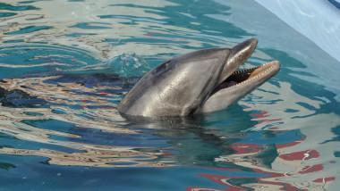 delfini delfinariu mediafax