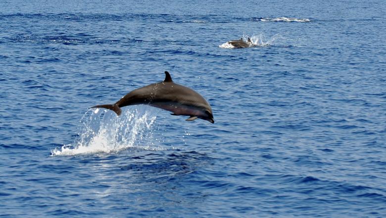 delfini mfax