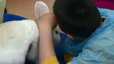 terapie iepuri