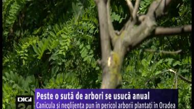 arbori 160614