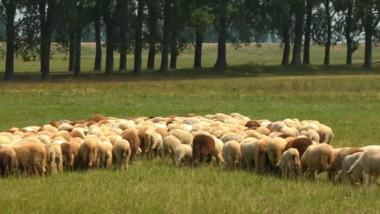 turma de oi ialomita