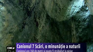 CANION 7 SCARI
