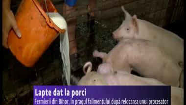 BETA lapte la porci
