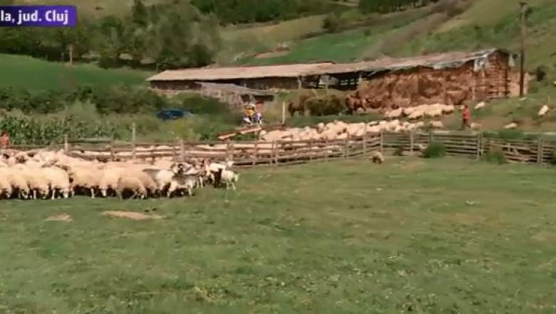 mediu rural