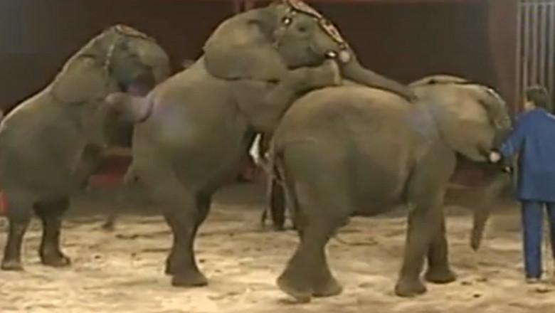 elefant circ