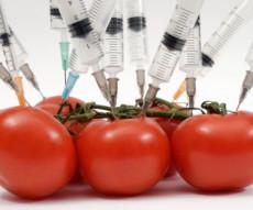 alimente modificate genetic 14.09