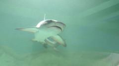 icon expozit ie de rechini vii 290814