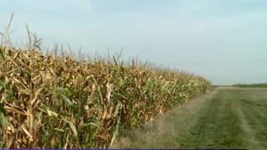teren agricol porumb