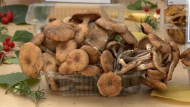 multe ciuperci