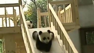 panda tobogan