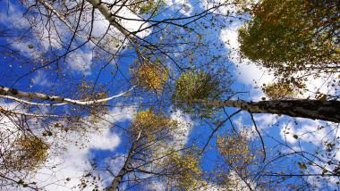 padure copaci soare vreme meteo-Mediafax Foto-Thomas Dan