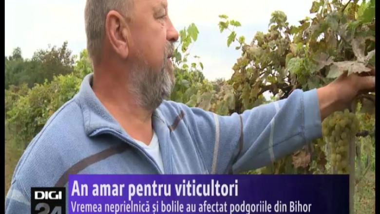 viticultori 161014