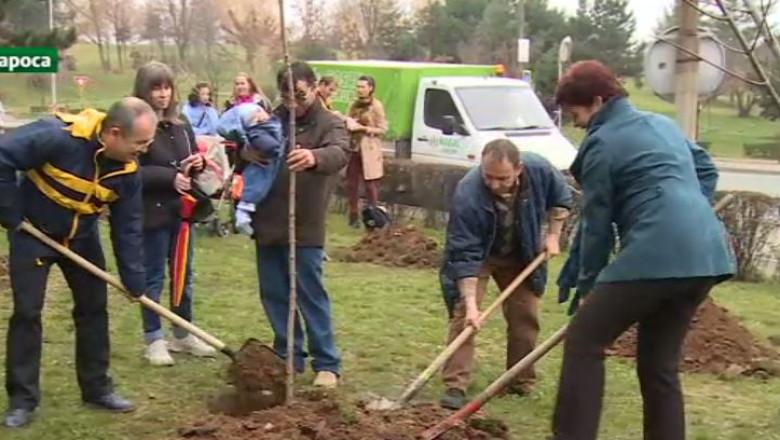plantare pomi